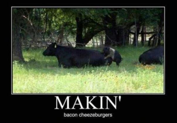 makin cheeseburgers