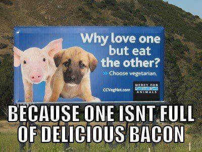 Pigs n puppies